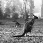 オーストラリア駐在中の会議後、社長にこっぴどく怒られた
